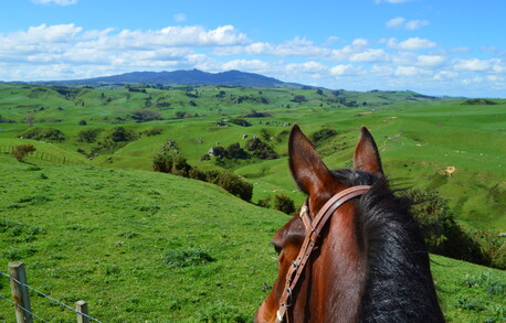 views rolling hills horse ride