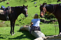 picnic with two horses